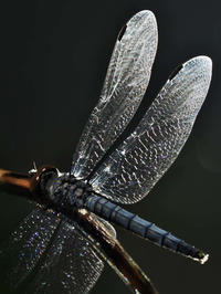 最後の一翅 - 1/365 - WEBにしきんBlog