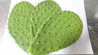 食用サボテン ノパル , Edible cactus Nopal - latina diary blog