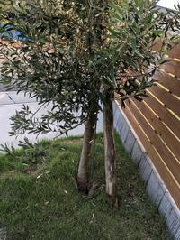お家と共に成長する木 - Bd-home style