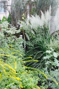 秋だね・・・ - CHIROのお庭しごと