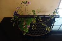 秋草を竹籠に - g's style day by day ー京都嵐山から、季節を楽しむ日々をお届けしますー