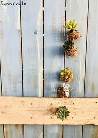 お待たせしました!9月多肉植物の会のご案内 - さにべるスタッフblog     -Sunny Day's Garden-