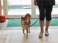 犬のしつけ方教室 - SUPER DOGS blog