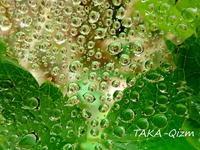 雨上がり - TAKA-Qizm