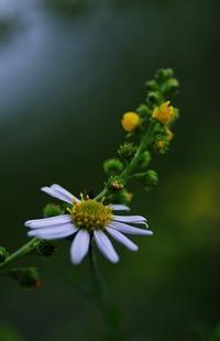 初秋の花-1 - 自然と仲良くなれたらいいな2