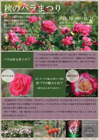 10月「花フェスタ記念公園」で - バラとハーブのある暮らし Salon de Roses
