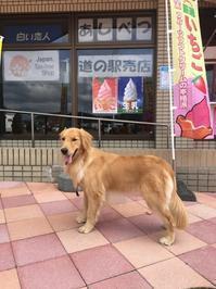2018/9 北海道レンタルキャンピングカーでの旅 (3) 富良野へ - ジョージ3のぐうたら日記 2
