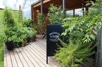 クレマチスの苗を植え付けてニヤニヤ - HOME SWEET HOME ペコリの庭 *