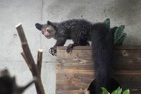 上野・真夏の夜の動物園2018~明るいアイアイ - 続々・動物園ありマス。