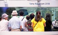 美ら海 in GINZA - 心のカメラ   more tomorrow than today ...