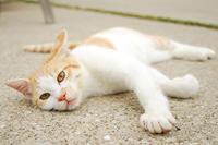 漁港の猫たち2018.08.29 - ちわりくんのありふれた毎日II
