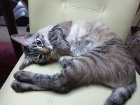 癒やしのこうすけ - 猫とカメラと美味しいものと。。。