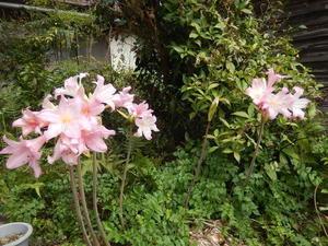 初秋の庭 -