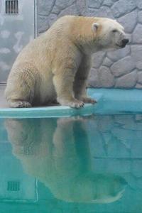 遊ぶ「ロッシー」 泳ぐ「バニラ」 - 動物園放浪記
