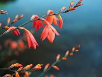 水辺の花 - 風の香に誘われて 風景のふぉと缶