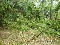 台風21号による公園樹木の被害状況です。 - デジカメ散歩悠々