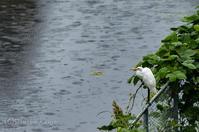 雨 - 撃沈風景写真
