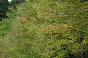 #1250樹木公園 -
