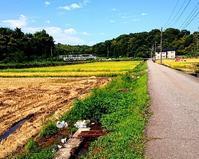 秋澄む - 金沢犀川温泉 川端の湯宿「滝亭」BLOG