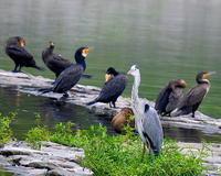 久々 水辺の鳥撮り  - 星の小父さまフォトつづり