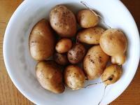 トホホな収穫と私の料理 - コテージ便り