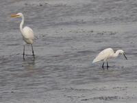 調整池の鳥たち① - 今日の鳥さんⅡ