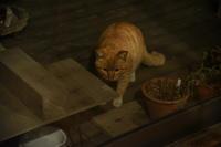 猫神様はサービス精神旺盛 その2  - りきの毎日