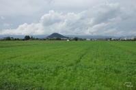 橿原市高殿町 藤原宮 コスモスは育つ - ぶらり記録(写真) 奈良・大阪・・・