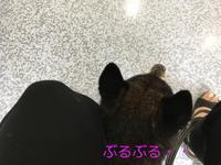 病院の日(胆泥、てんかん、血圧) - HAMAsumi-Life