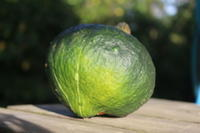 白露:アスパラガスの新芽が出始めました。 - 週刊「目指せ自然農で自給自足」