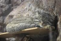 上野・真夏の夜の動物園2018~明るい小獣館B1 - 続々・動物園ありマス。