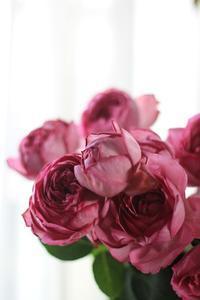 「美しい♡」だけで十分なのに、生花の魅力について。 - 新しい地図~ やまよう篇(アンフィモンフルール)