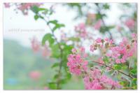 夏の彩も。 - Yuruyuru Photograph