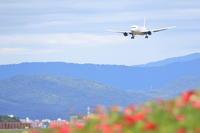 お花畑へようこそ ~旭川空港~ - 自由な空と雲と気まぐれと ~ from 旭川空港 ~