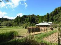 白露/移り行く日々 - 千葉県いすみ環境と文化のさとセンター
