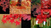 秋を先取り⑦ぎっくり腰静養中 - 写心食堂