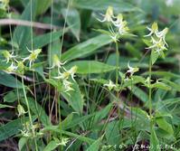 2005年9月の花と山 - 清治の花便り