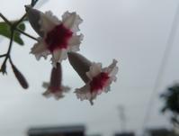 雨の日の花… - 侘助つれづれ