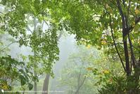 霧の赤城自然園 2 - お花びより