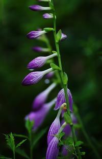 初秋の花-3 - 自然と仲良くなれたらいいな2