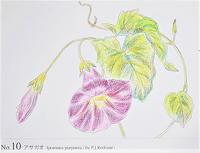 0902塗り絵 - 楽趣味(Lakshmi)