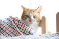 IKEAさんへ - ぎんネコ☆はうす