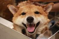 笑顔がとろけるトリミング - 宮城県富谷市明石台  くさか動物病院ブログ