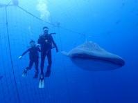 9月10日ファミリー海遊び - 沖縄・恩納村のダイビング・青の洞窟体験ダイビング・スノーケルご紹介