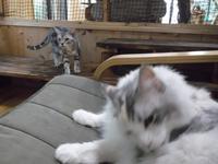 猫の文学館 II - ネコと文学と猫ブンガク