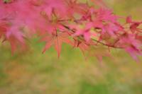 秋の始まり - Jester's Pictures