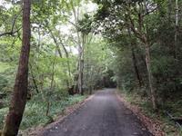 『ながら川ふれあいの森を歩きながら・・・・・』 - 自然風の自然風だより