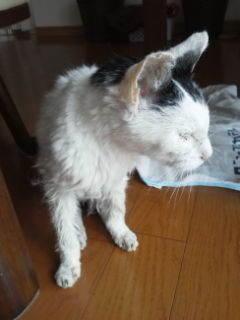 愛猫が23歳旅たった「蘭」ちゃん -