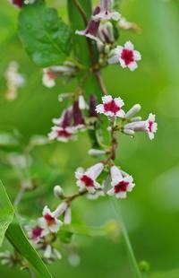初秋の花-4 - 自然と仲良くなれたらいいな2