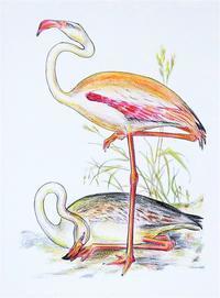 0909塗り絵2 - 楽趣味(Lakshmi)